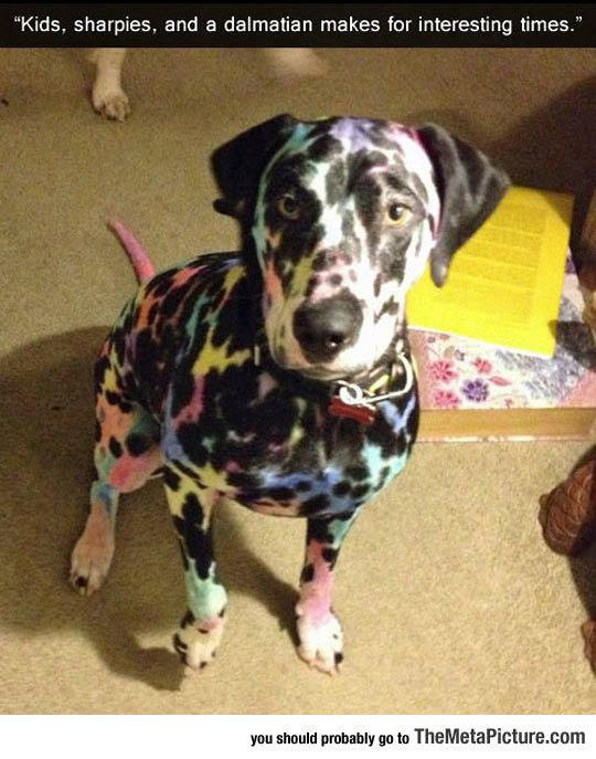 Colorful Dog