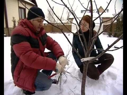 Весенняя обрезка деревьев, кустарников и цветов - подборка видео / обрезка / 7dach.ru