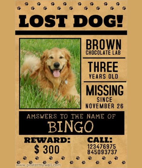 13 Missing Pet Poster Templates Printable Word Amp Pdf