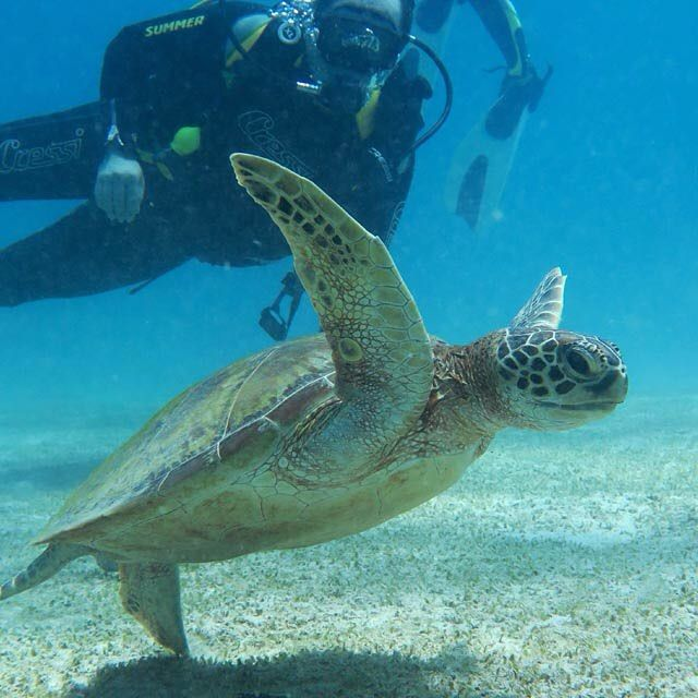 Lucky diver on a close encounter with a turtle on his PADI open water dive 1!! #underwater #sea #elnido #wetpixel #philippines #ocean #travel #paditv #fisheyeuwp #oceanlife #PADI #elnidogram #love #instagood #follow #photooftheday #beautiful  #picoftheday #instadaily #love #instagood #follow #twitter #photooftheday #beautiful #picoftheday #instadaily #instalike #bestoftheday #water_of_our_world