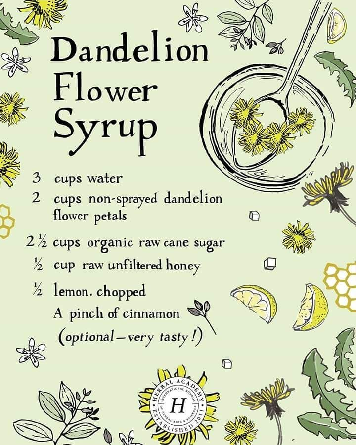 Angie On Instagram I M In Kitchen Witch Mode This Morning And All The Rain We Are Getting Is Making Me Excited For All Herbalism Dandelion Dandelion Recipes