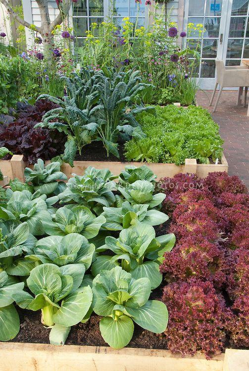 1000 Images About Edible Landscape On Pinterest Gardens 640 x 480