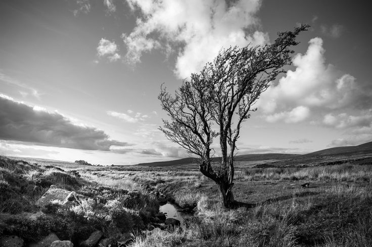 Lone Tree - Sally Gap | by shaymurphy