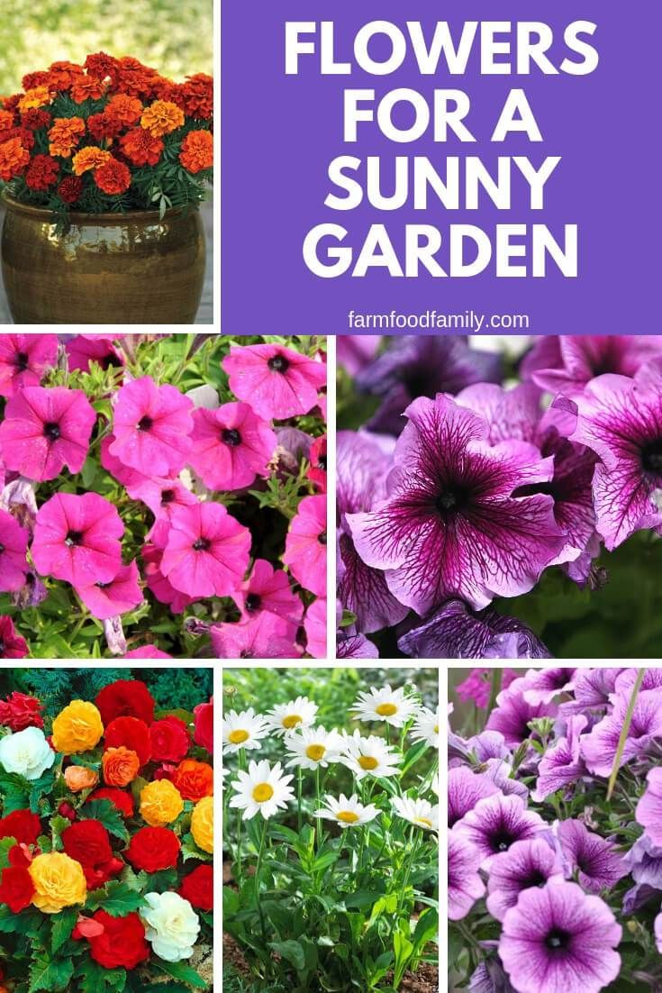 4 Best Flowers For A Sunny Garden Amazing Flowers Plants Sunny