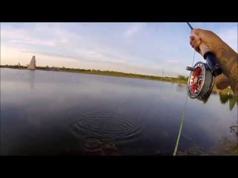 Fly Fishing for bass with Top Water Popper (GoPro Session HD) - (More info on: https://1-W-W.COM/fishing/fly-fishing-for-bass-with-top-water-popper-gopro-session-hd/)