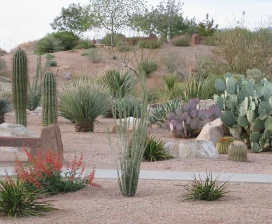 67 best southwest landscaping images on pinterest for Easy care landscaping ideas