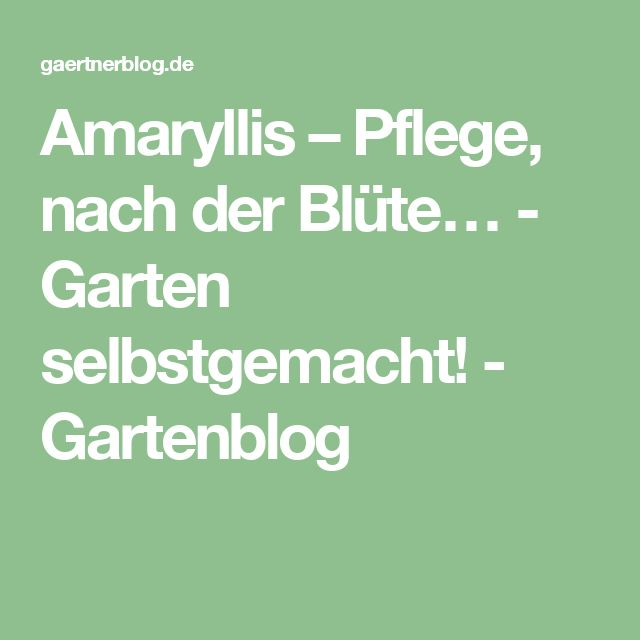amaryllis pflege nach der bl te garten selbstgemacht gartenblog garten pinterest. Black Bedroom Furniture Sets. Home Design Ideas
