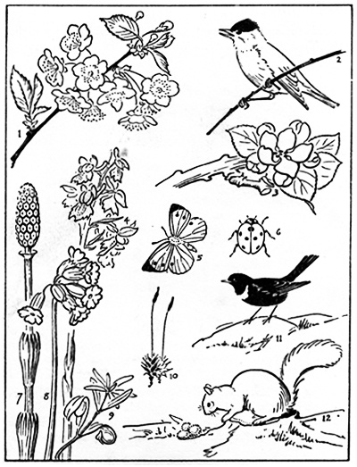 """Webpage that shares what to expect from wildlife and plant life each month """"The little green book that accompanied my childhood was """"Wild Life Through the Year"""" by Richard Morse. It was published in 1942 and I particularly like the sketchbook page for every month. Also here is a link for April poetry and songs  http://www.egreenway.com/months/monapr.htm: Homeschool Helpers, Sketchbooks Pages, Homeschool Ideas, Natural Journals, Green Book, April Sketchbooks, Homeschool Natural, Journals Ideas, Natural Exploring"""