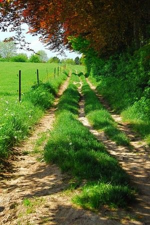 rutted country road - They are like rainbows. You will often find unsought treasures at the end.