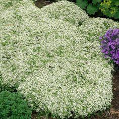 25+ Best Ideas About Dachbegrünung On Pinterest | Dachterrassen ... Pflanzen Fur Dachbegrunung Dachgarten