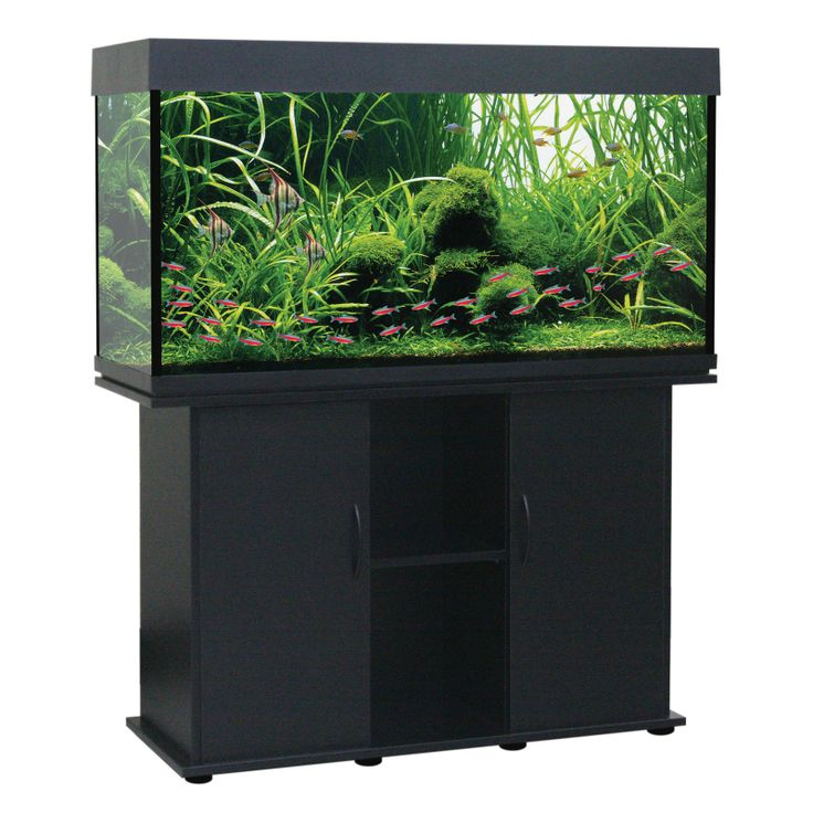 Best 25 75 gallon aquarium stand ideas on pinterest 75 for Petsmart fish tank stand