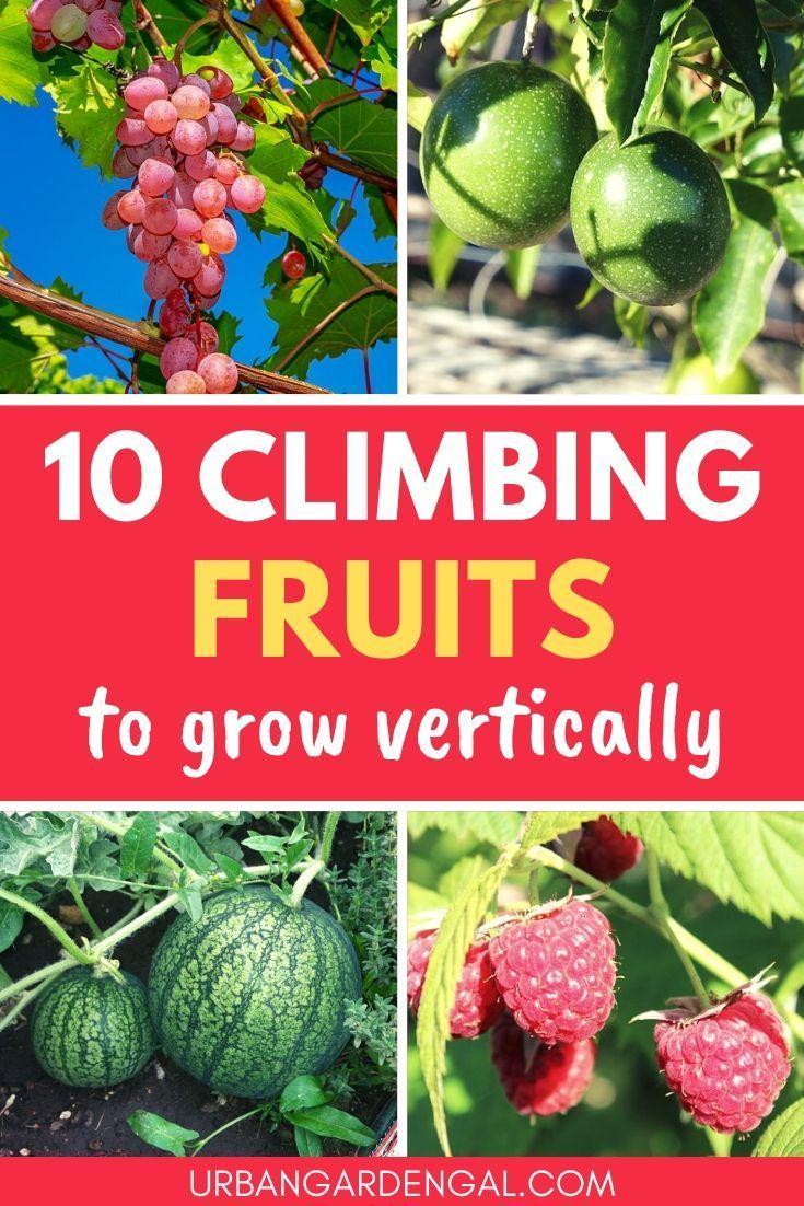 Winterizing Fruit Trees