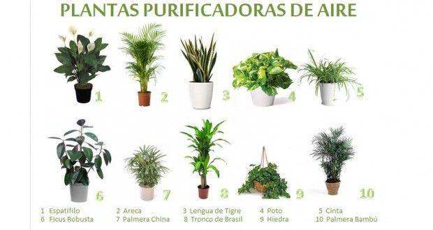 Las 25 mejores ideas sobre plantas que purifican el aire - Plantas de interior purificadoras del aire del hogar ...