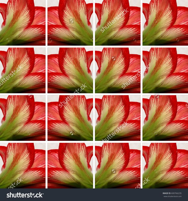 Background made of square shapes full of #Amaryllis #flower #texture