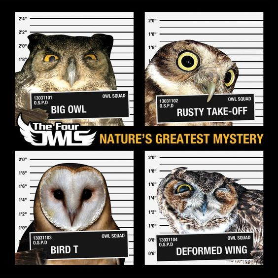 Nature's Greatest Mystery (Four Owls)