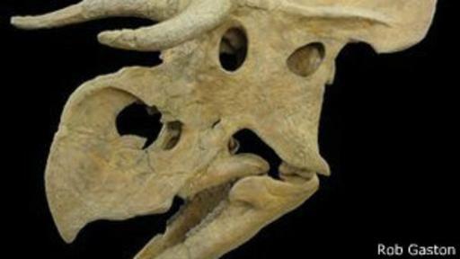 """(53) El Nasutoceratops, un nuevo dinosaurio narigudo y cornudo - Su nombre hace referencia a su """"nariz"""" extremadamente grande y sus largos cuernos.  Los paleontólogos dicen que no se parece a nada antes visto.  Ahora, un grupo de científicos reveló datos sobre este peculiar dinosaurio en un estudio publicado en la revista especializada """"Proceedings of the Royal Society B""""."""
