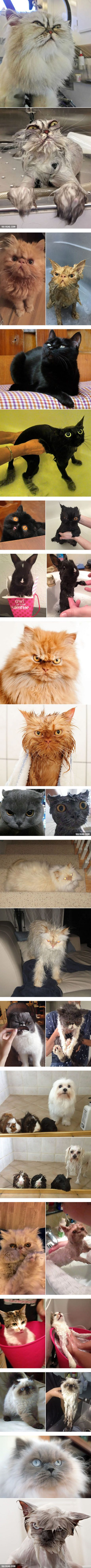 Before And After Bath                                                       …