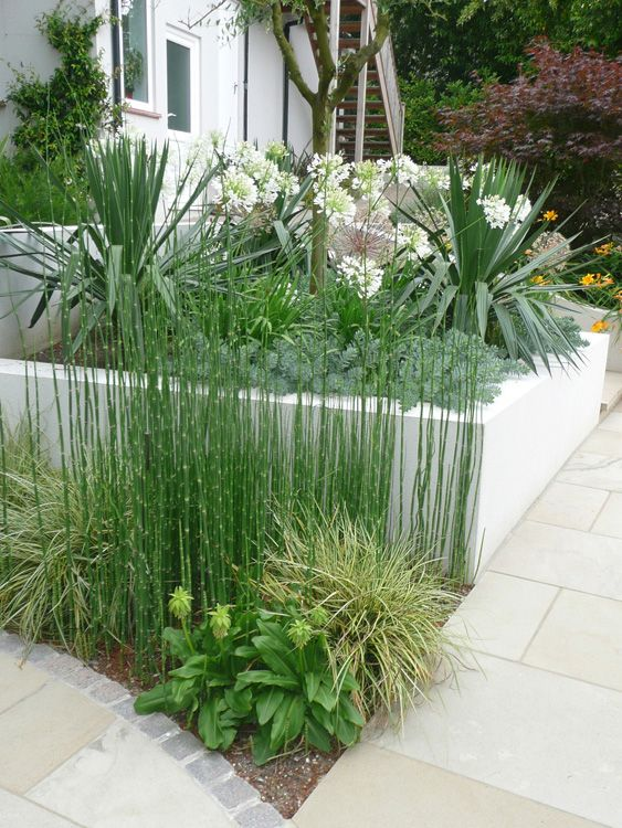 Contemporary Garden Planting & Plants Used In Philip Nash Design Garden Projects - London & South East
