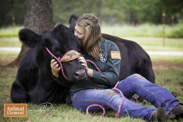 Cierra Padgett loves her show 4H heifer cattle black angus on Animal Element Detox