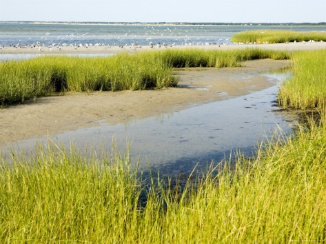 Few will ever know the importance of a salt marsh..