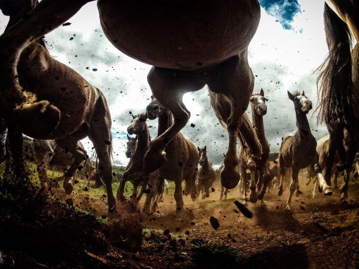 Horses power - Cavalo Crioulo, Paranà, Brazil WEB: www.schmidchris.com  FACEBOOK: https://www.facebook.com/chrisschmidphotography INSTAGRAM: https://instagram.com/schmid_chris/