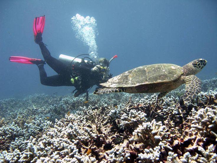 Sukeltaminen on Thaimaan suosituin aktiviteetti. Pinnan alla on värikkäiden kalojen lisäksi muitakin meren eläviä. #turtle #Thailand