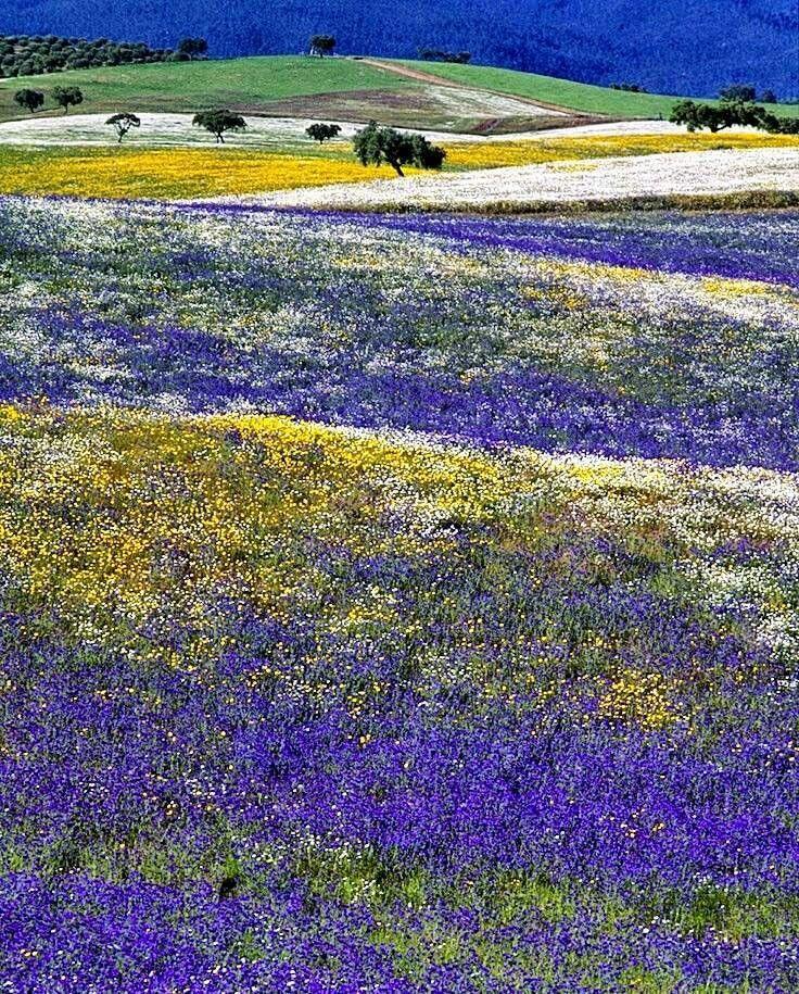 Beautiful, Alentejo, Portugal
