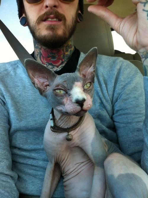 neck ink and crazy cat