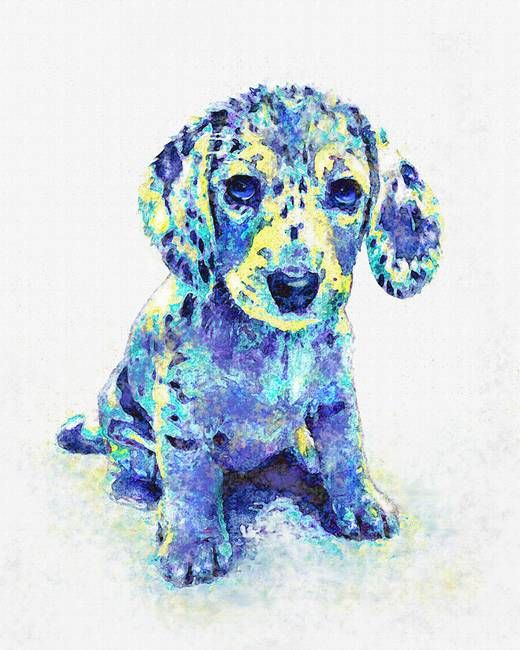 blue-dappled-dachshund_art.jpg (520×650)