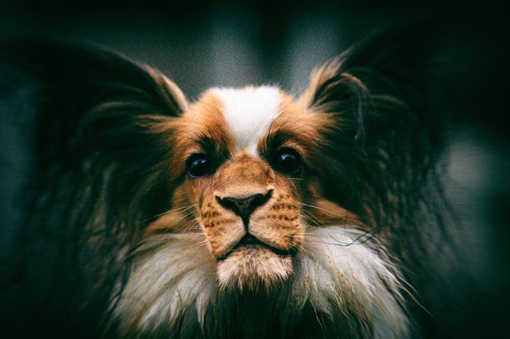 Pes + Lev