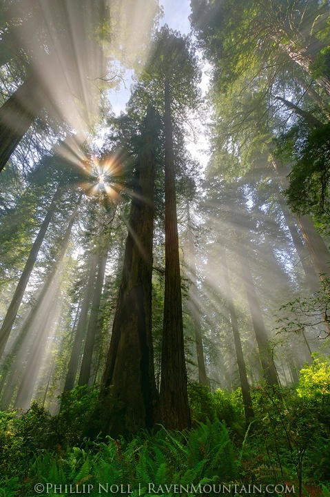 The redwoods of Northern California is one of the settings in The Gifting Series by K.E. Ganshert #YALit