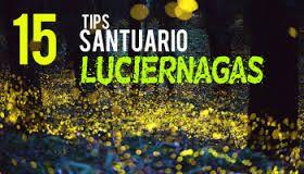 Resultado de imagen para el santuario de las luciernagas en mexico