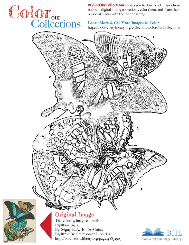 """#ColorOurCollections. Original Image: http://biodiversitylibrary.org/page/48852967. To download this image, right click on the pin and choose """"save image as"""" to save the image to your computer. You can then print and color at your leisure!"""