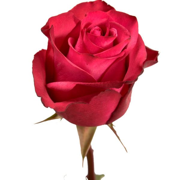 All Our Varieties Eden Roses Flores Bonitas Rosas Hermosas Rosas