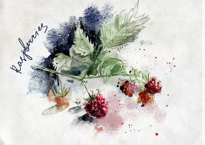 Посмотреть иллюстрацию Юля Липовка - Ягода малина.