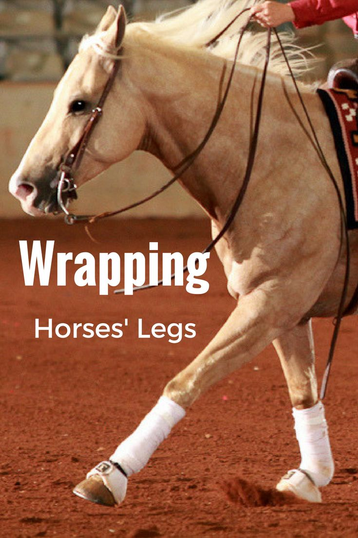 AQHA Professional Horsewoman Bonnie Minor demonstrates how to apply a polo wrap and standing wraps, two techniques every horseman should know.