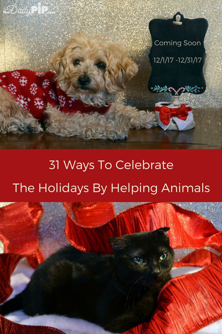 31 Ways To Celebrate The Holidays By Helping Animals