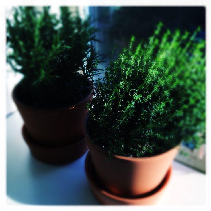Sun on my herbs