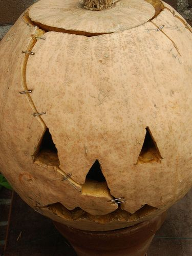 Frankenstein Pumpkin...freaking ingenious!  simple slice + heavy duty staples