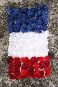 1000 images about bleu blanc rouge on pinterest red white blue happy bast - Fleur bleu blanc rouge ...