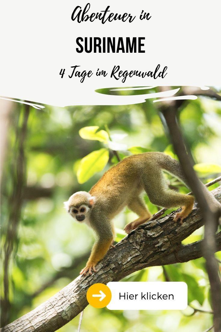 Du Planst Deine Reise Nach Suriname Und Mochtest Etwas Besonderes Erleben Dann Plane Mit Uns Deinen Aufenthalt Im Regenwald Hier Abenteuer Regenwalder Reisen