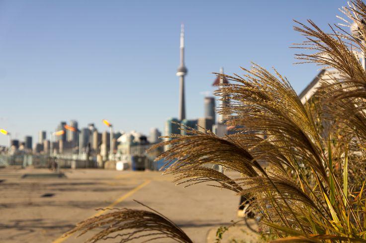 #Toronto #Island #Fall #CNTower #Nature #WardsIsland