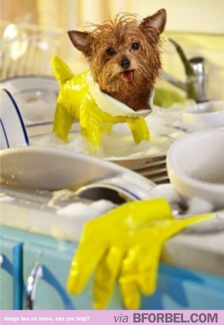 This is a dog in a dish glove. Your argument is invalid