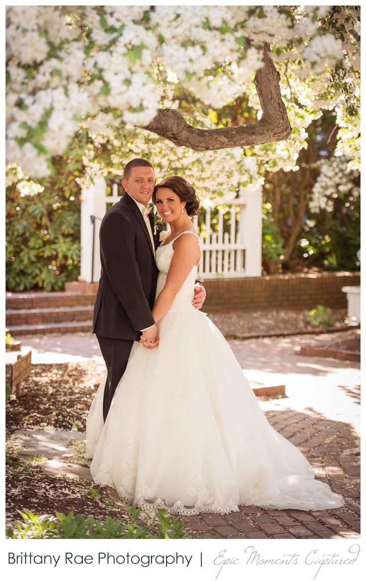 sheraton harborside wedding in portsmouth nh bride and groom in blossom tree