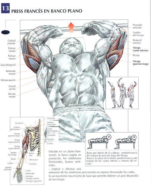 Ejercicios Triceps