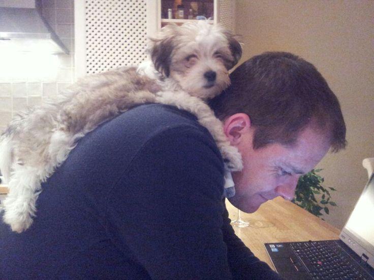 Adopt A Dog Leverett Ma