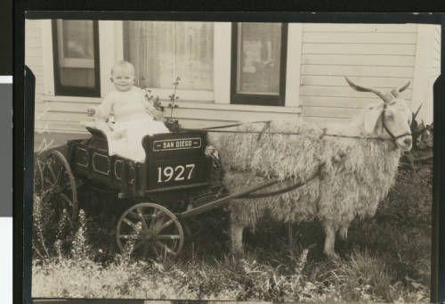 Child posing in goat cart, 1927. http://digitallibrary.usc.edu/cdm/ref/collection/p15799coll65/id/9260