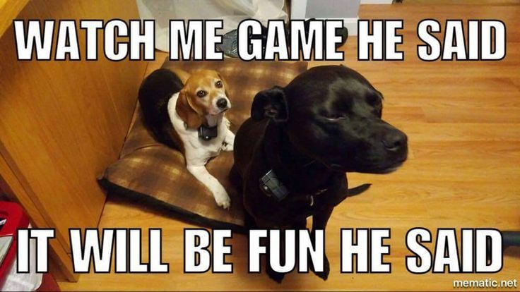 This is a #meme my husband created with our #fubabies Chloe and Abby! He is a gamer and I laughed so hard when he sent it! SHARE YOURS in the comments! #cinchchallenge #doglovers #animallovers #mansbestfriend #puppylove Love animals? Visit our page and follow for more posts! #dogsliketolookpretty https://www.facebook.com/lillarosehairaccessoriesforallhairtypes/