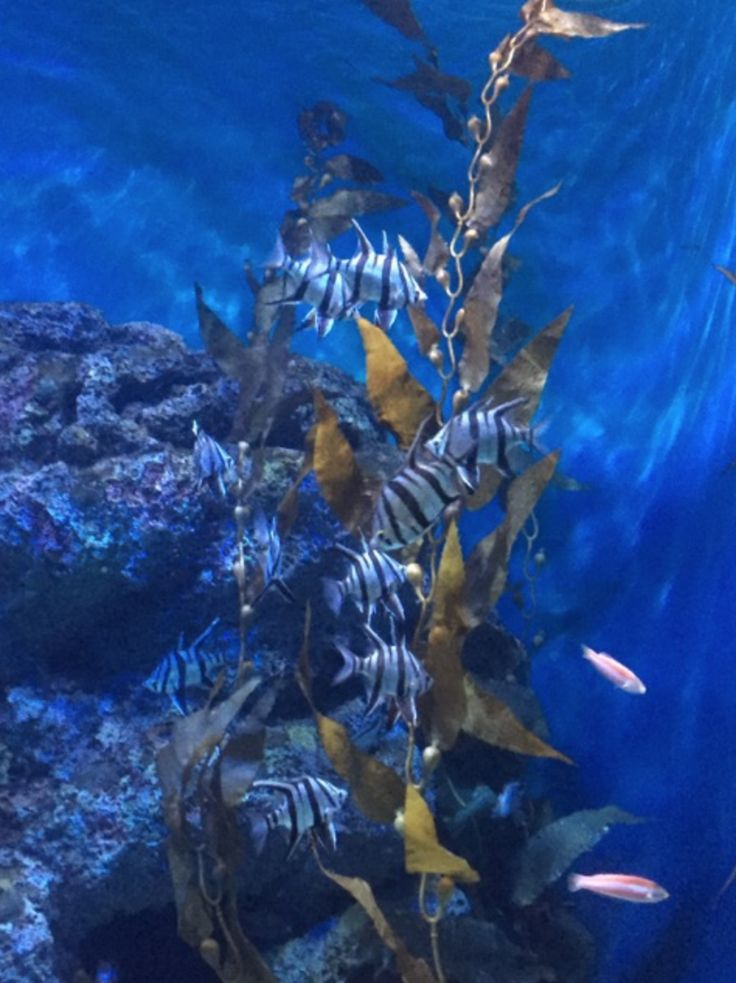 UNDERWATER WORLD  Looking for a special holiday outing - then a visit to…