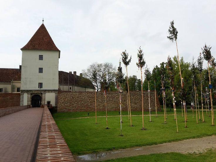 Májusfák a várparkban